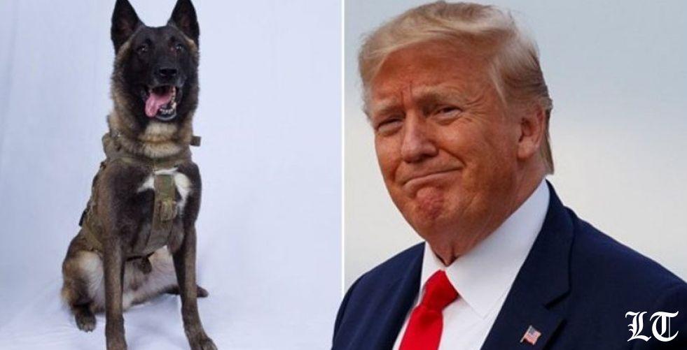 """ترامب يدعو الكلب """"كونان"""" إلى البيت الأبيض بعد عملية البغدادي"""