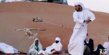 صورة رائعة لصيد الصقور في الامارات