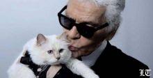 """القطّة """"تشوبيت"""" الوريثة المحتملة للمصمّم كارل لاغرفيلد"""
