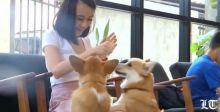 كلاب ترحب بك في هذا المقهى